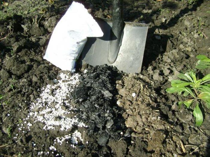 Какое удобрение нужно почве осенью, чтобы она стала плодороднее