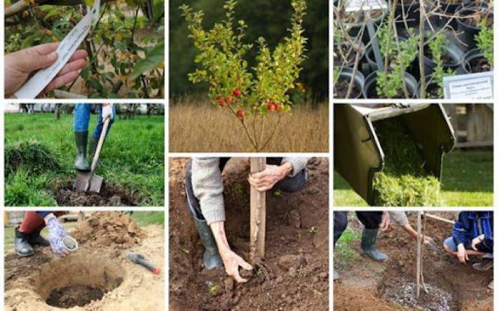 Какие деревья и кустарники хорошо приживаются при посадке осенью