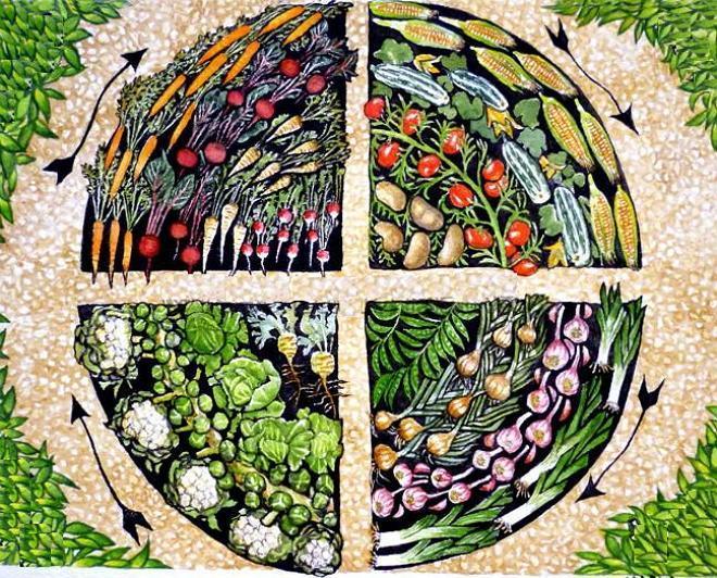 Севооборот овощных культур на грядке