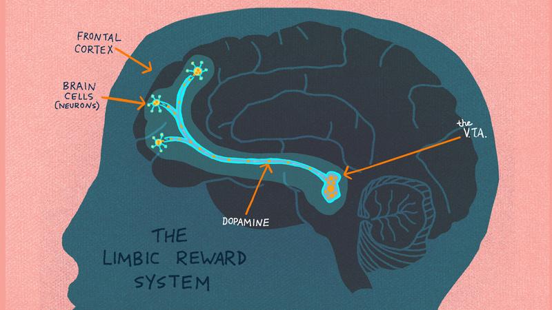 КАКнаш мозг распознает удовольствие