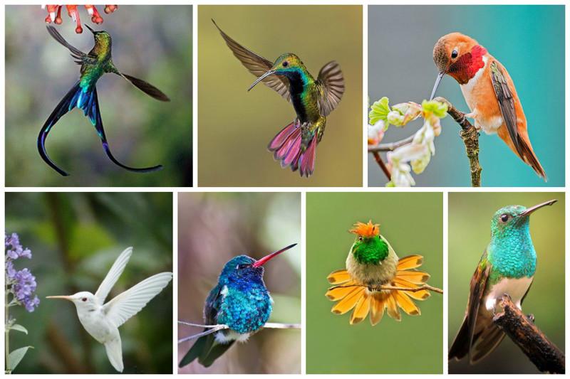 Маленькое чудо   колибри