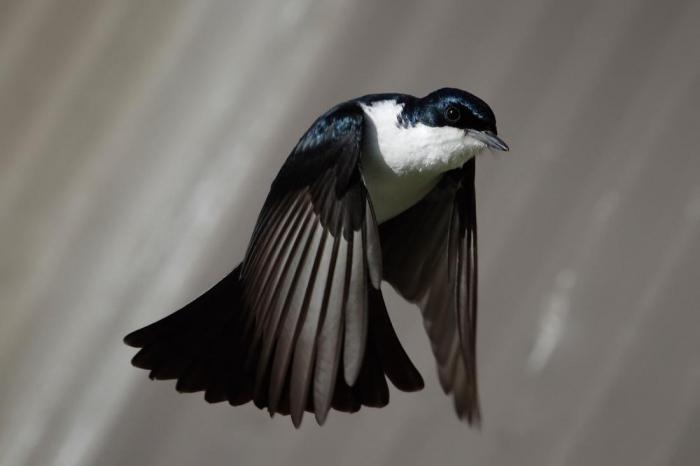 Неужели птицы спят с одним открытым глазом во время полета?