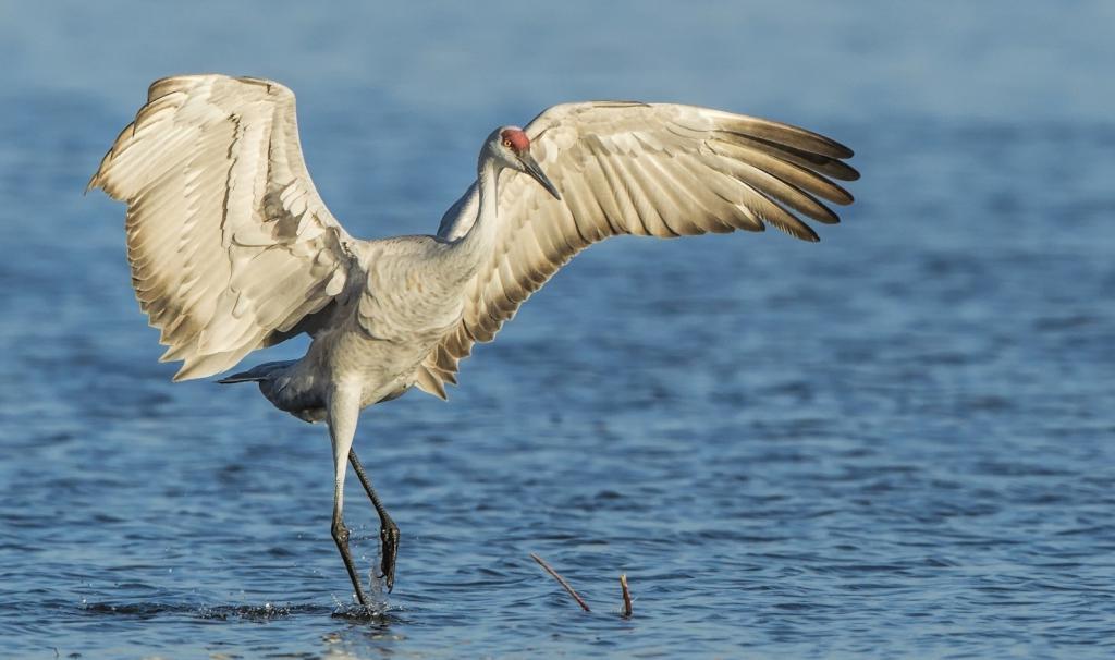 Первые весенние птицы: описание