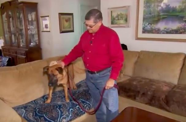 Хозяева этой собаки узнали, наконец, почему онасмотрит наних, неотрываясь, каждую ночь