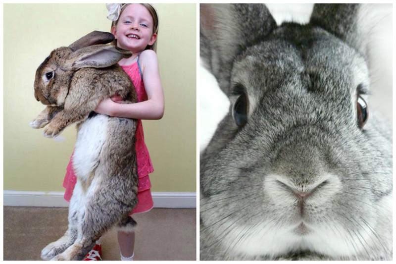 Кролики   этонетолько ценный мех