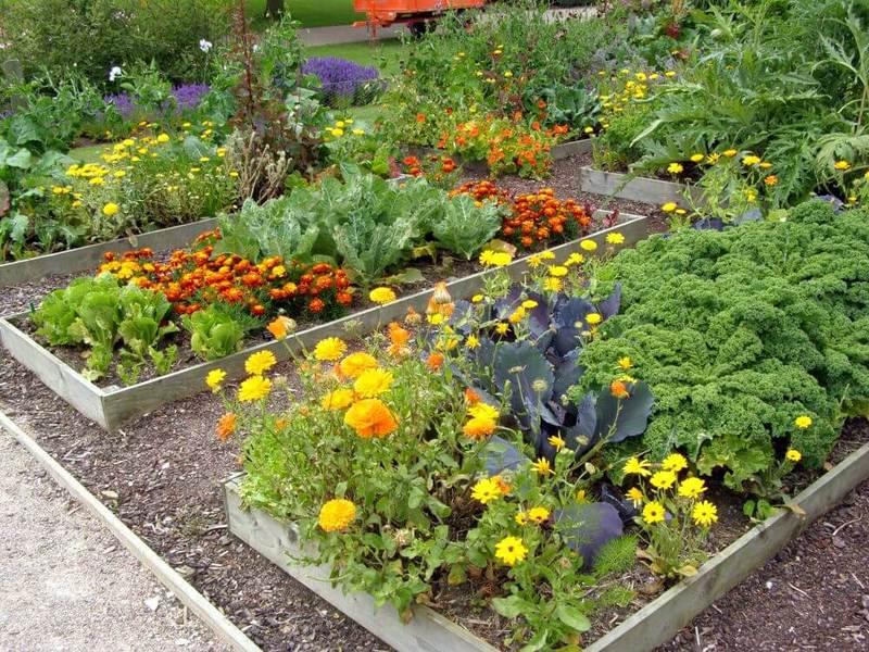 Смешанные посадки — идельное решение для вашего огорода