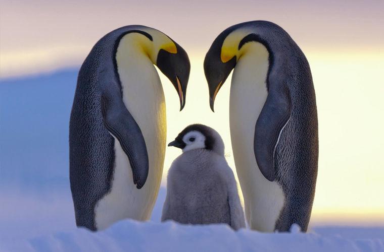 Лучшие отцы вмире животных
