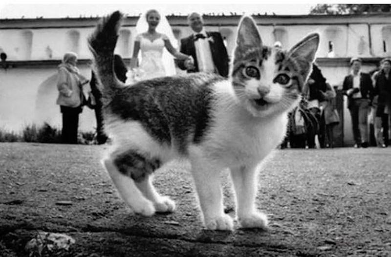 Внезапные коты