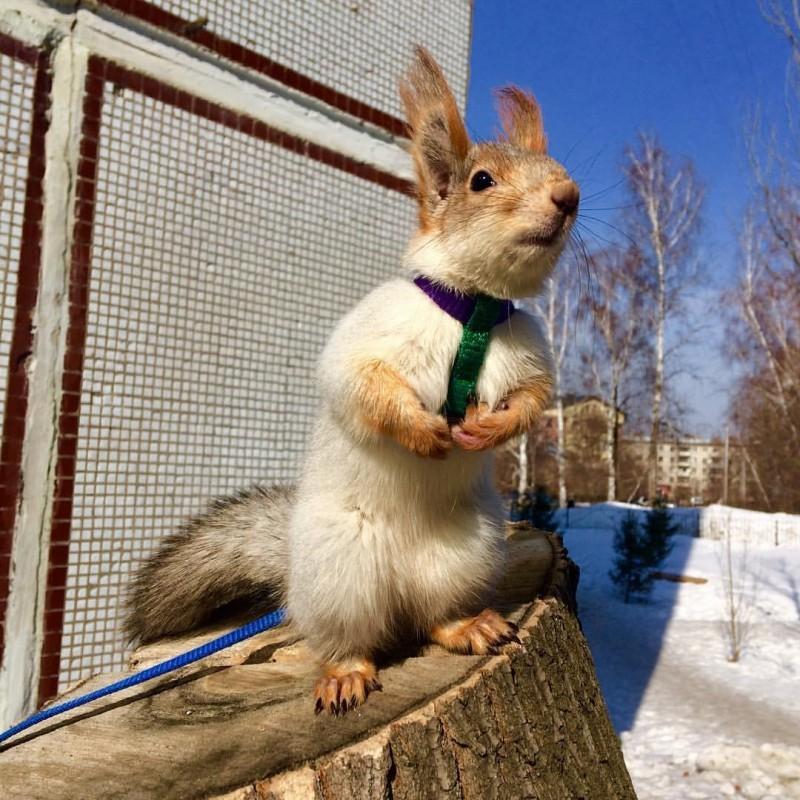 Жительница Новосибирска спасла выпавшего изгнезда бельчонка