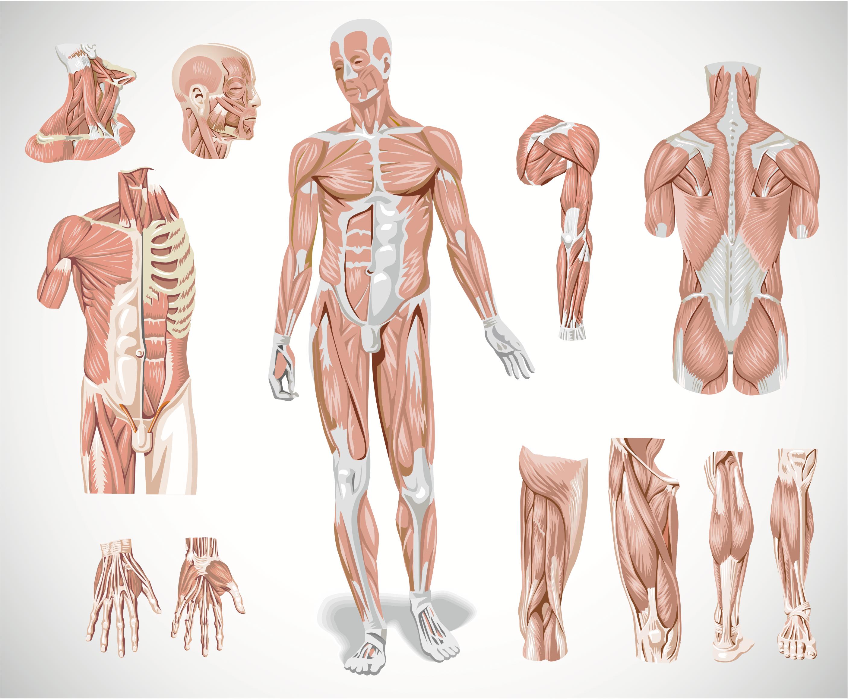 Супер упражнения для устранения простатита
