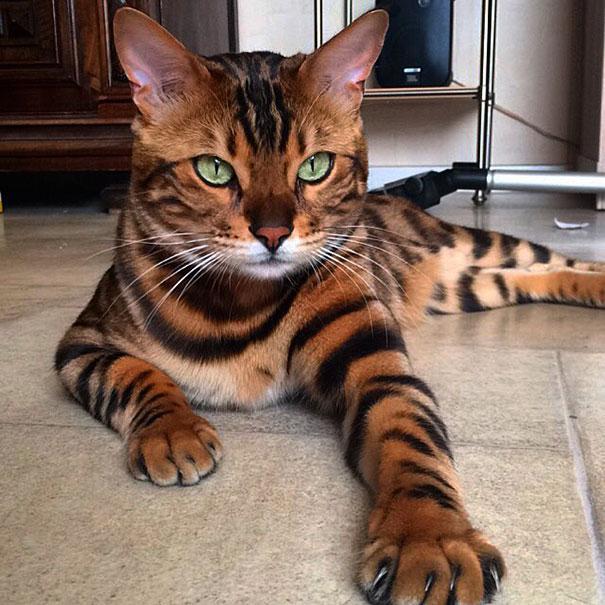 Эта кошка — самая красивая на всей планете!