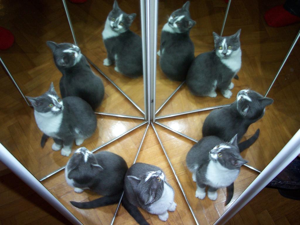 Пользователи Интернета спорили, сколько здесь кошек. Ответ лежит на поверхности!