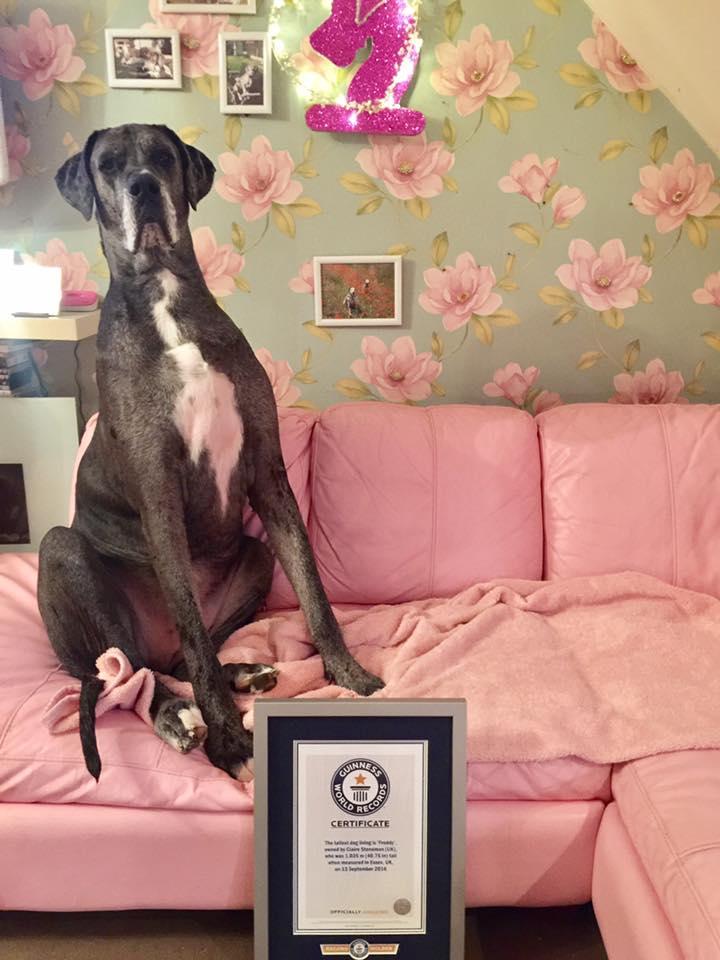 Знакомьтесь, это Фредди — самый большой пес в мире