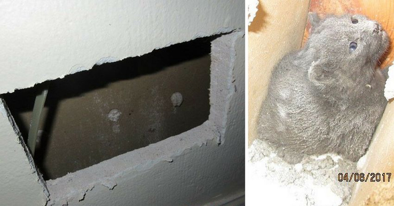Хозяева услышали писк, доносящейся из бетонной стены. Спасатели поняли, что у них мало времени…