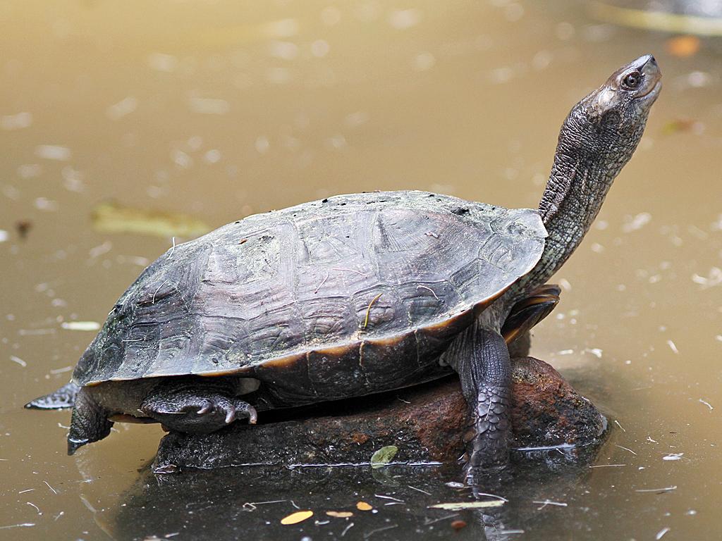 как быстрее похудеть в домашних черепах