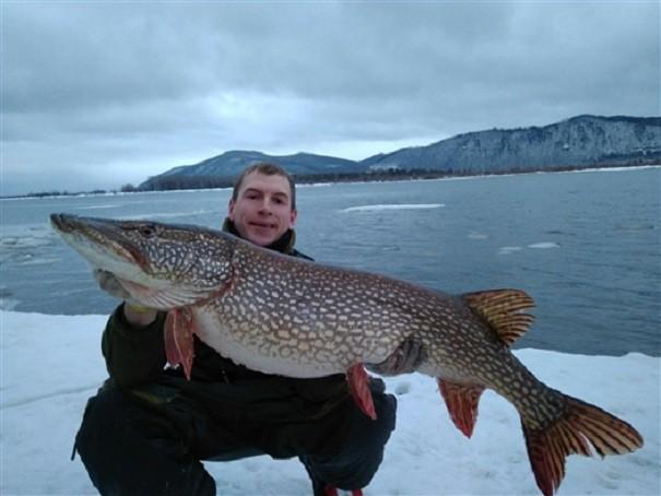 ПодСамарой поймана гигантская щука на13,5 кг