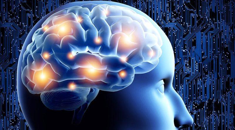 Как наше тело влияет на мозг