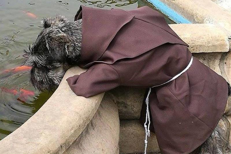 Первая собака монах, которая живёт вмонастыре инаслаждается своей новой просветлённой жизнью