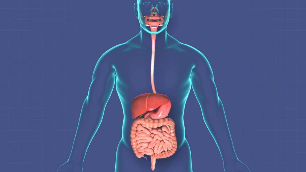 Анатомия – что такое? Предмет изучения науки