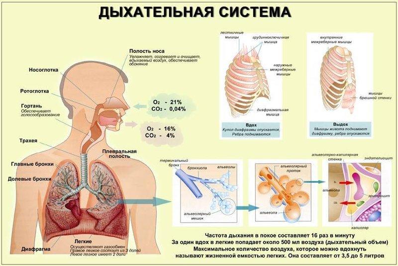 Рэй Пит: Физиология дыхания — ключ к пониманию основных патологийвсех органов