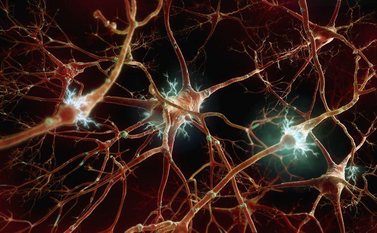 Основные свойства нервной системы человека и их характеристика