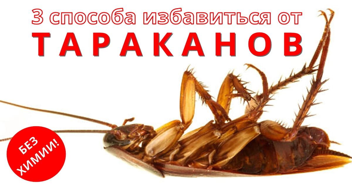 Есть только 3 проверенных способа избавиться от тараканов НАВСЕГДА
