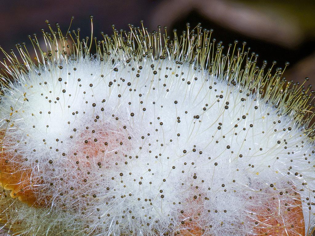 где растет гриб мукор