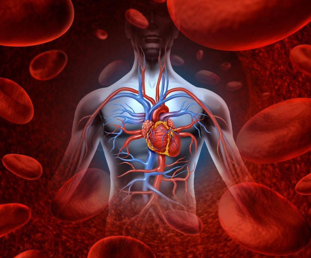 Артериальная кровь цвет