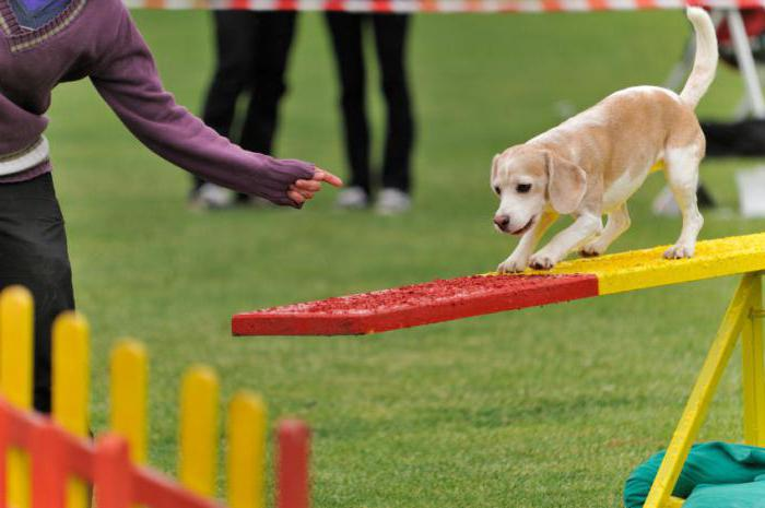 Картинки по запросу собака и препятствие