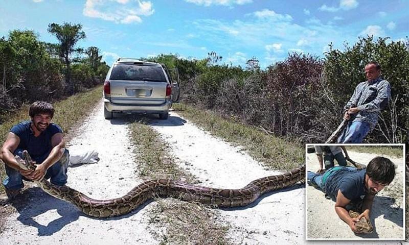 Охотники назмей поймали воФлориде пятиметрового питона!