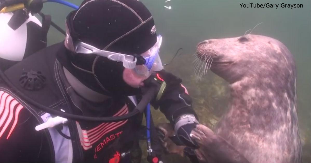 К дайверу под водой прицепился тюлень. Вот зачем он хватал его за руку!