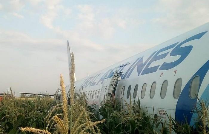 В Жуковском из-за птиц упал самолет: какие еще случаи в авиации происходили из-за пернатых