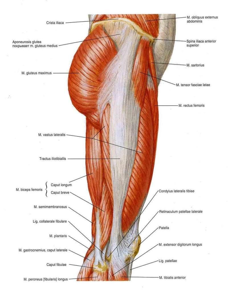 Метод Фельденкрайза: приятный способ устранить излишнее напряжение мышц