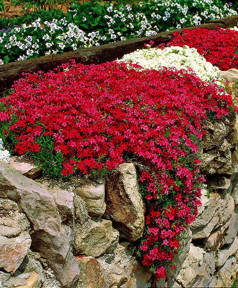 Когда сажать почвопокровные растения
