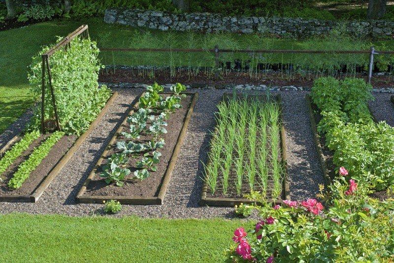 Старые сорта растений: семена, которые достаточно купить только один раз