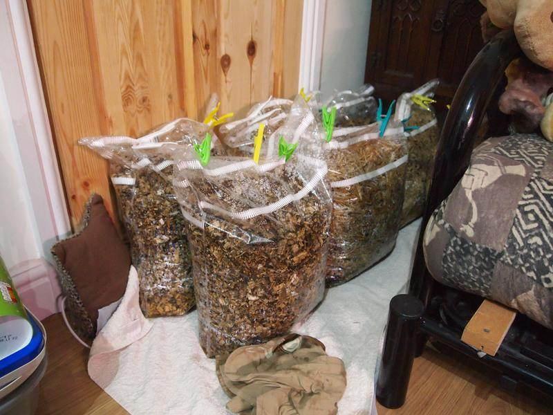 Выращивание вешенок в домашних условиях для новичков: пошаговая инструкция