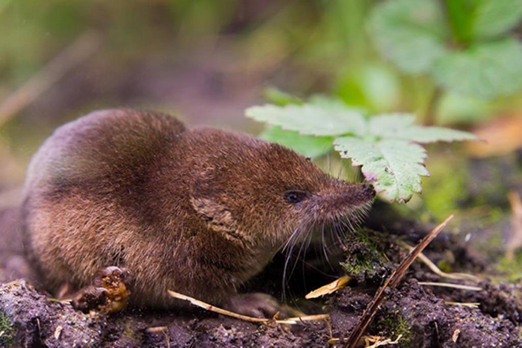 Насекомоядные животные: фото и названия, характеристики, интересные факты