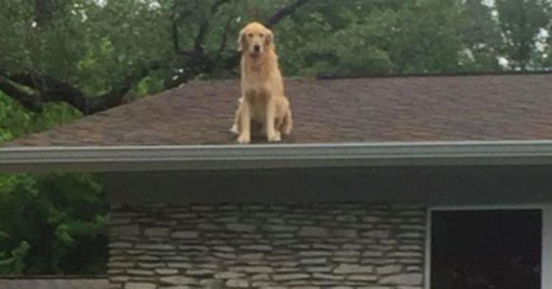 Семья устала объяснять соседям, что их собака делает на крыше. Тогда они поставили у дома эту табличку…