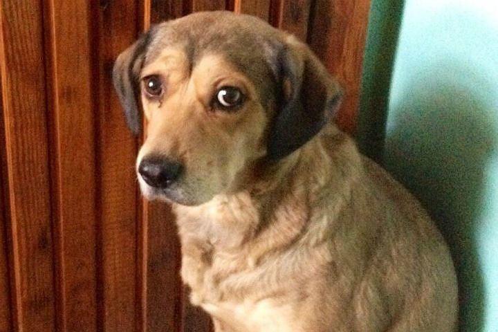 Осиротевшая собака тридняпросидела утела хозяина вКрасноярске