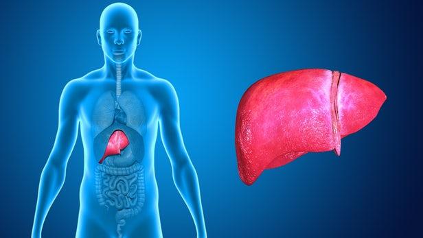 Вирусный гепатит A: пути передачи, симптомы, диагностика, лечение и профилактика