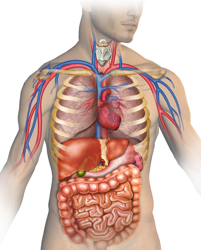 Строение тела человека. Видеоурок. Окружающий мир 2 Класс 5