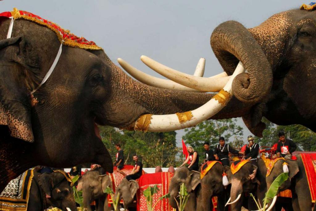 13 марта: день слона в Таиланде, день Плутона в США (Иллинойс). Праздники 13 марта