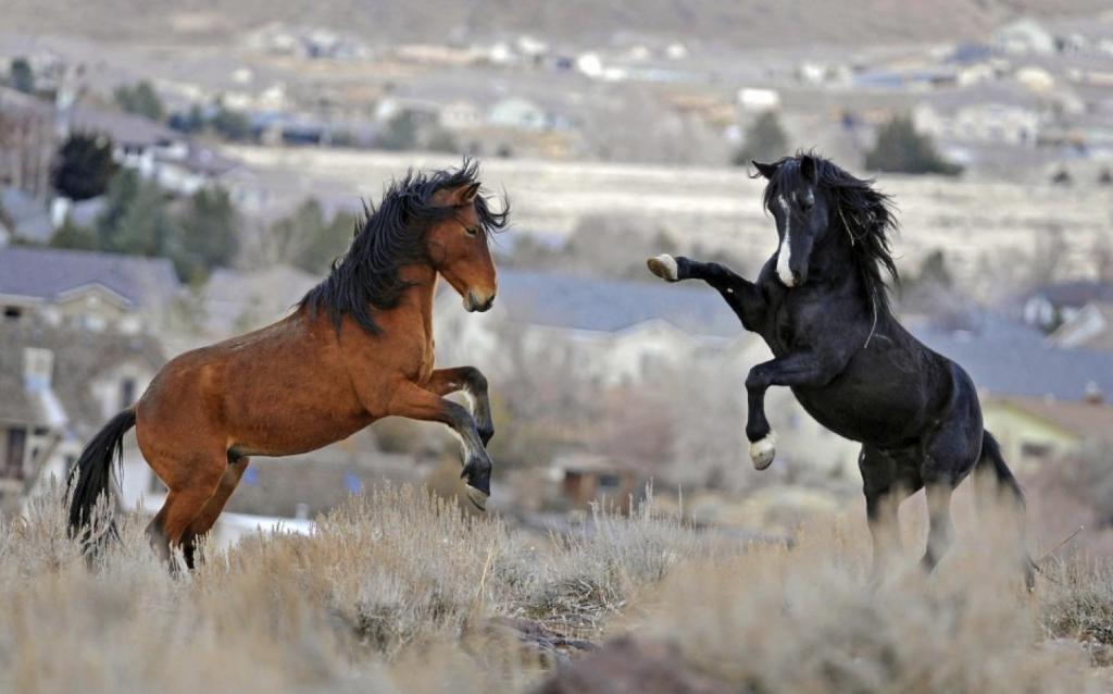 К чему снятся лошади девушке – к скорой помолвке.