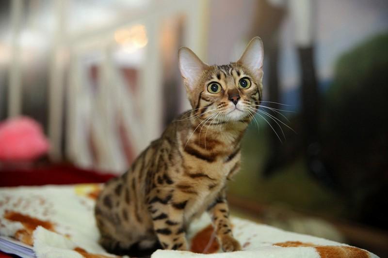 Авызнаете длячего кошкам эти кармашки  наушах?