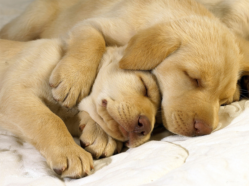 Ученые выяснили, что снится собакам. Ну просто не сдержать слез!