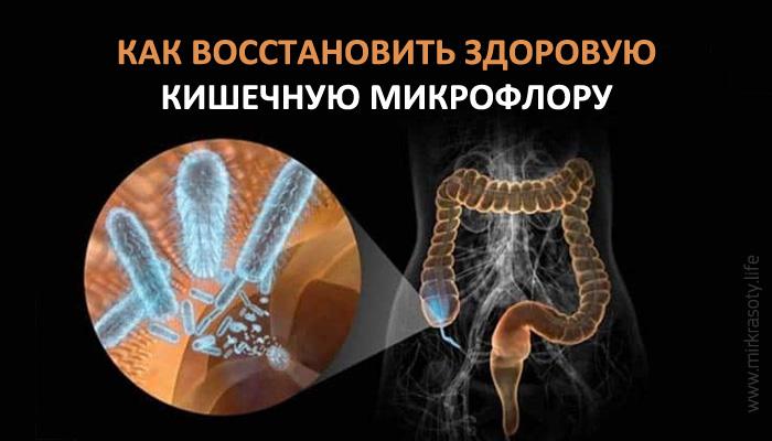 Как восстановить здоровую кишечную микрофлору