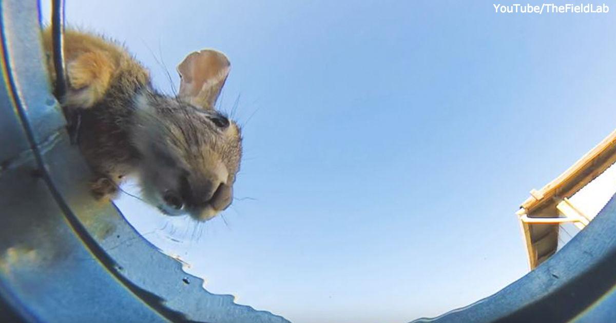 Я спрятал камеру в ведре воды, чтобы посмотреть, кто будет с него пить...