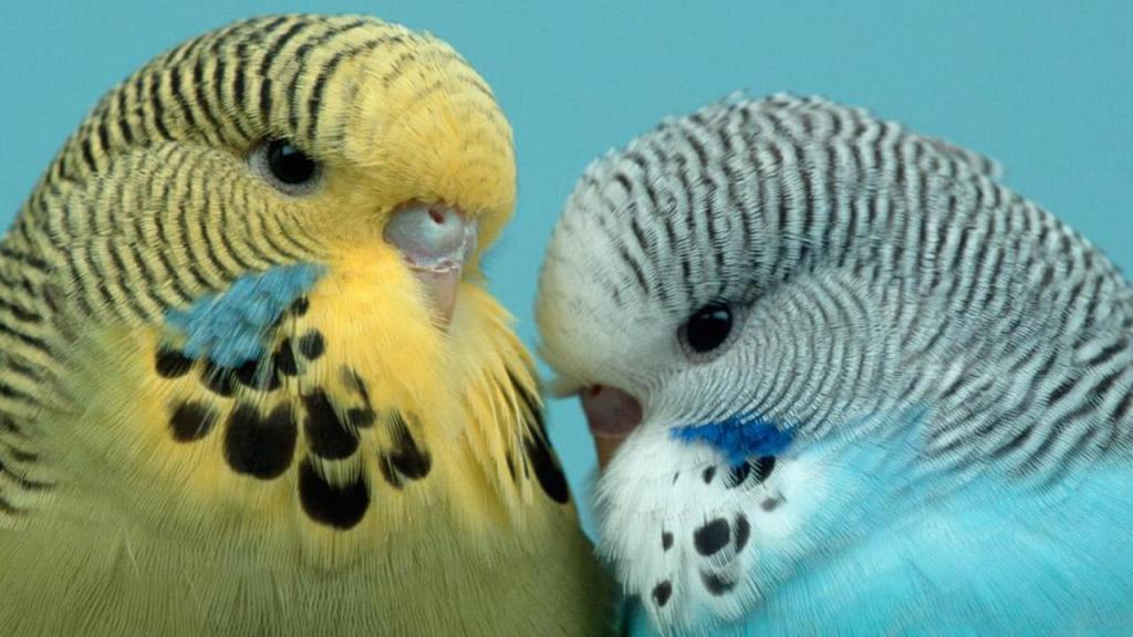 Сколько лет живут различные птицы в том числе вороны и попугаи 15