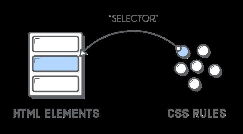 CSS селекторы и их виды