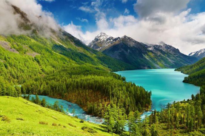 Алтайские бальзамы: виды, способы применения, отзывы
